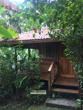 Samasati Retreat & Rainforest Sanctuary: My wonderful bungalow