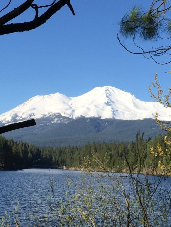 Jack Trout Fly Fishing: Mt. Shasta on a sunny, April day