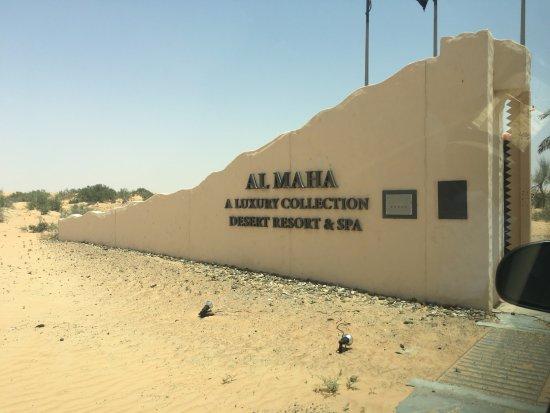 منتجع المها الصحراوي: Entrance as you drive in