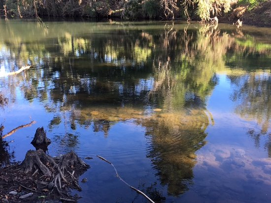 Canungra, Австралия: checking out the turtles and fish swimming past. I later heard there were platypus in there too.