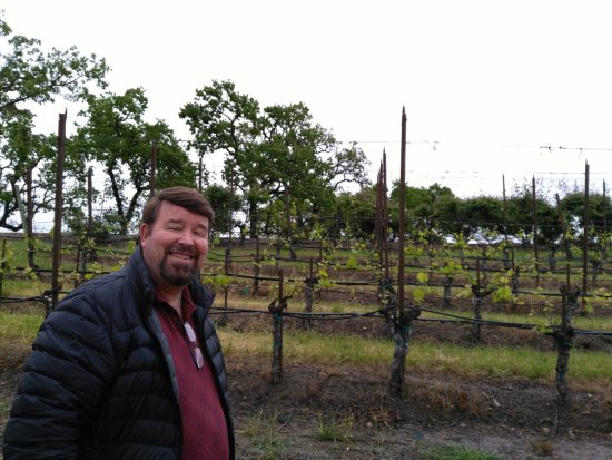 Healdsburg, CA: Different kinds of vines for different wines