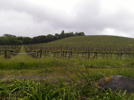 Wilson Winery: More of the wineries