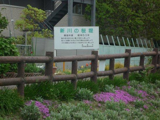Shinkawa no Sakurazutsumi