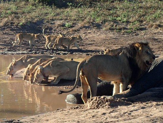 Ngoma Safari Lodge: Drinks anybody