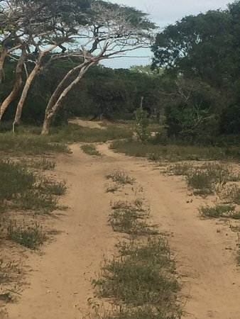 Bushwillow Collection: Walking trails