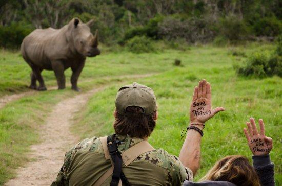 Kenton-on-Sea, South Africa: Rhino on Game Drive At Sibuya