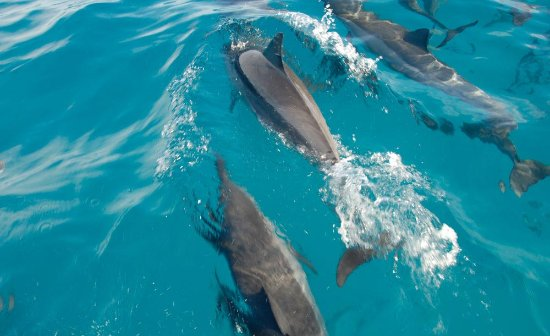 Тамарин: Swimming with dolphins in Mauritius