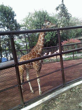 Nogeyama Zoo Foto