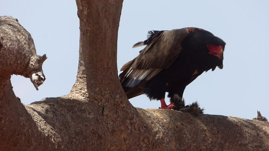 F. King Tours and Safaris - Day Tours: Plenty for bird watchers