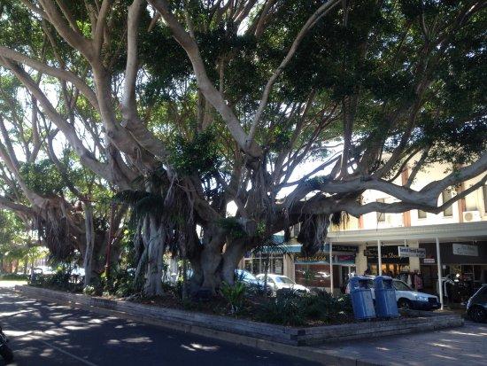 Sawtell, Australia: Shops and cafe's tree lined street