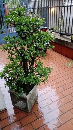 Imagen de Hotel Luzzatti