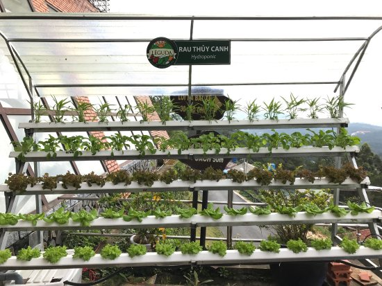 Thien Vien Truc Lam: You can see trough Da Lat from here. Very cool place and they have hydroponic vegetables.