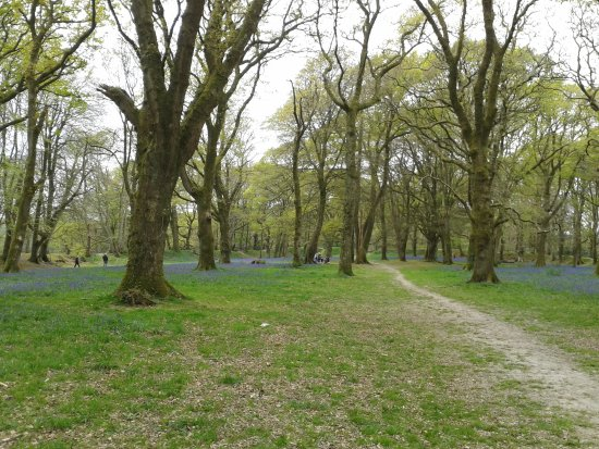 Colyton, UK: A view of the Camp