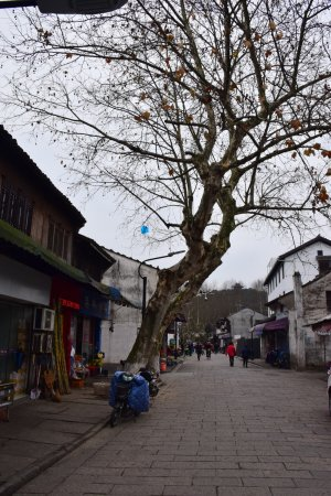 Cangqiao Street Photo