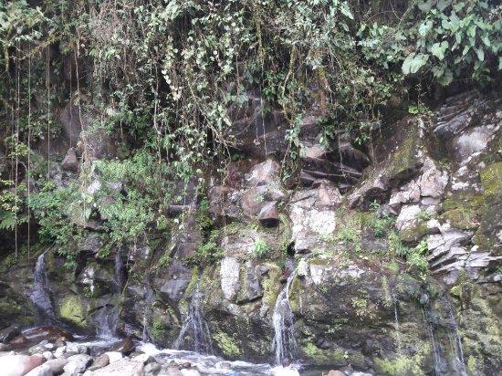 Provincia de Chiriquí, Panamá: Macho Monte,  Chiriqui