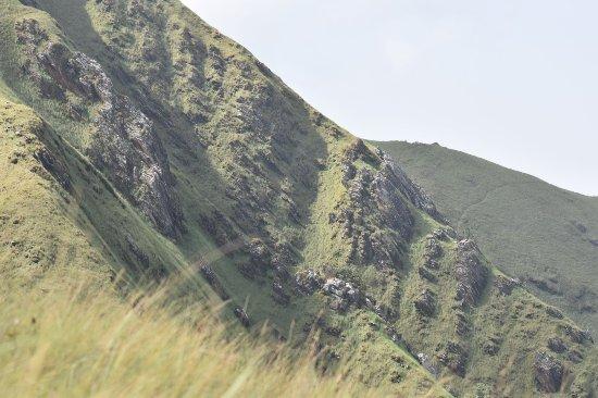 Guinea: Montane savanna
