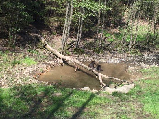 Theux, Belgium: ours dans l'étang