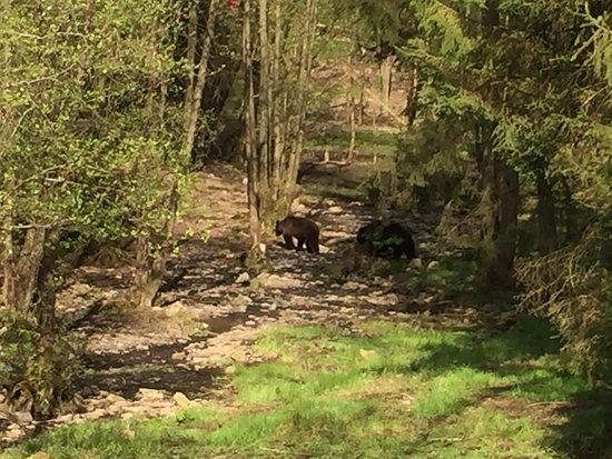 Theux, Belgium: les ours s'en vont!