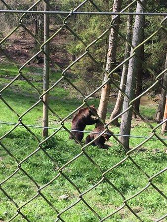 Theux, Belgium: Les ours jouent