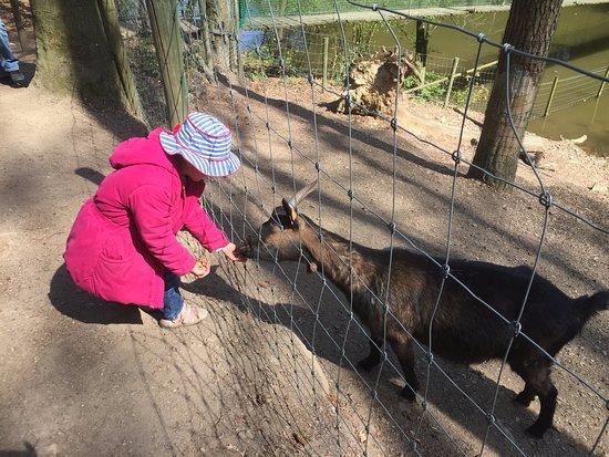 Theux, Belgium: La joie de notre fille lorsqu'elle donne à manger aux animaux!