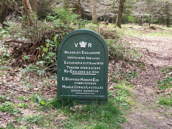 New Forest National Park Hampshire, UK: Wilverley Woodland Walk