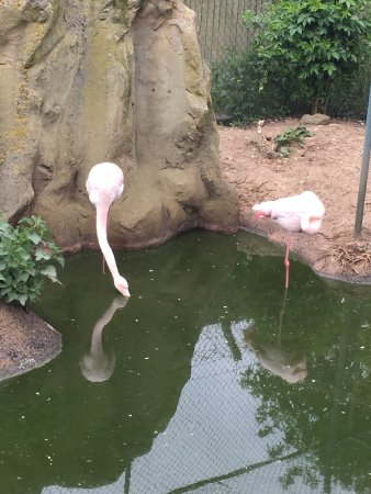 Woodside Animal Farm and Leisure Park: Shouldn't flamingos be pink...?