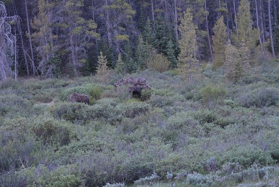Tin Cup: Momma Moose and her Twins