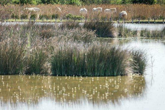 Les Marais du Vigueirat: paysage du marais