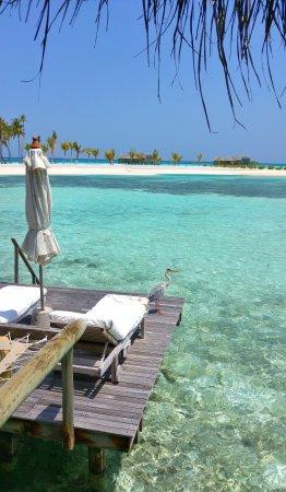 Gili Lankanfushi Maldives: 20170429_110727_HDR-01_large.jpg