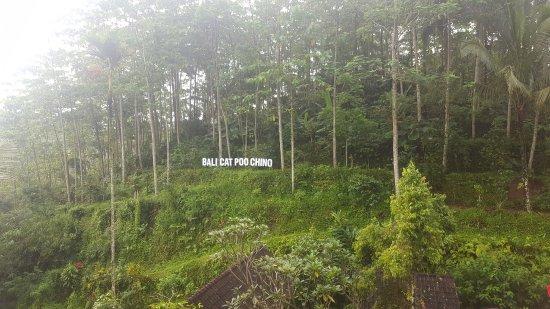 Bali cat poo chino - Picture of Satria Coffee Plantation ...