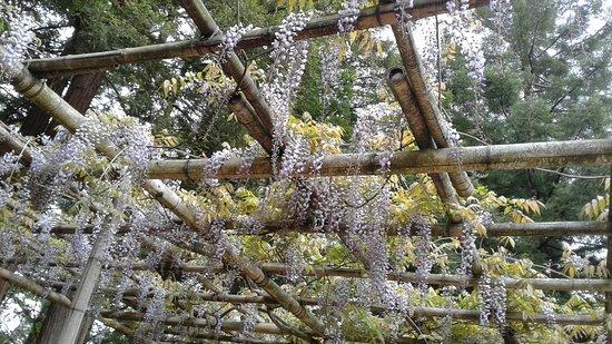 20170430 132432 picture of jardin japonais nantes tripadvisor for Jardin japonais nantes