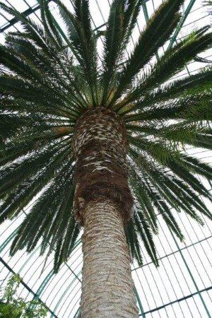 Jardin des serres d'Auteuil : Amazing palms