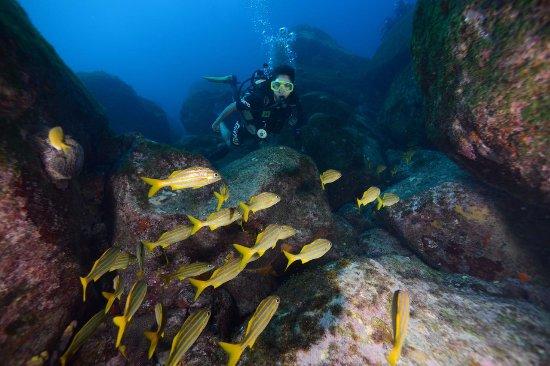 Atlantis Divers: peixinhos lindos