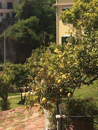 Castello di Arechi : Bellissimo giardino