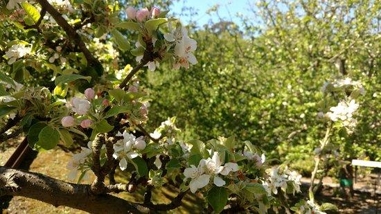 Manzanos en flor en el bot nico de gij n picture of for El jardin botanico gijon