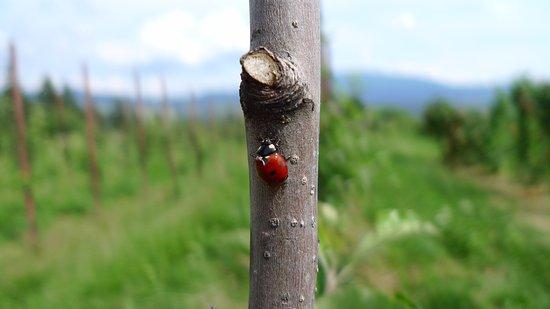 Brez, Italy: Biodiversità