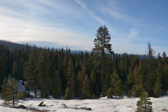 Montecito Sequoia Lodge: Beautiful view from the lodge