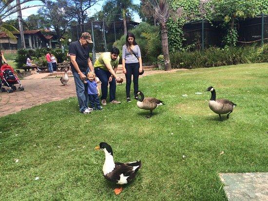 Alambique & Parque Ecologico Vale Verde: Patos