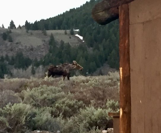 Moose, WY: photo1.jpg