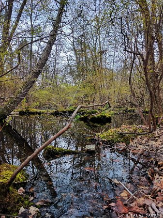 Esopus, Estado de Nueva York: A stagnant pond along the trail