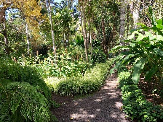 photo2.jpg - Picture of Botanical Gardens (Jardin Botanico), Puerto de la Cru...