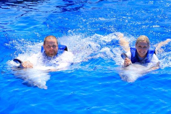 Villa del Mar Beach Resort & Spa: Swim with dolphins Signature Swim - Vallarta Adventures