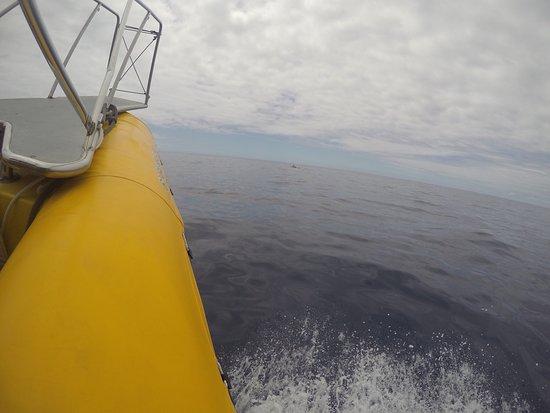 Inia Whale Watching: photo0.jpg