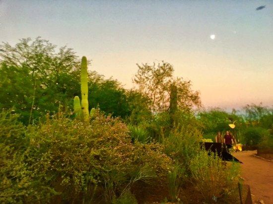 View Picture Of Desert Botanical Garden Phoenix Tripadvisor