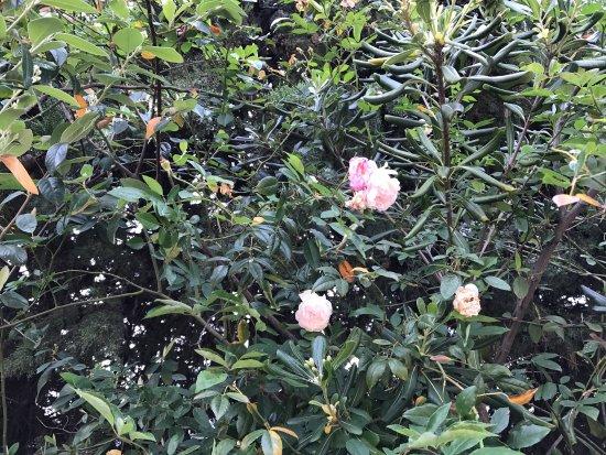 Picture of jardin for Jardin botanique nice