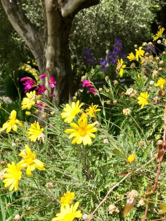 Jardin botanique nice frankrig anmeldelser tripadvisor for Jardin botanique nice