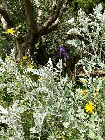 Jardin botanique nice frankrike omd men tripadvisor for Jardin botanique nice