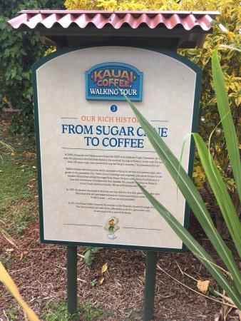 Kalaheo, Гавайи: Kauai Coffee Company