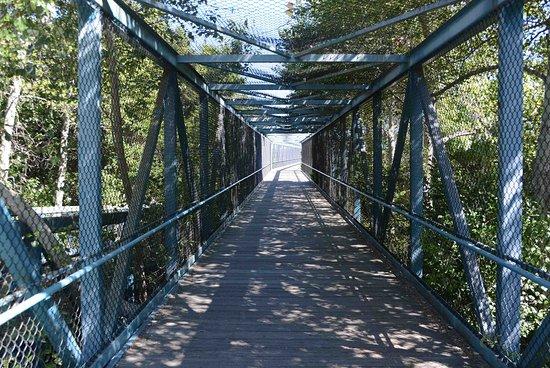 Stevens Creek Trail
