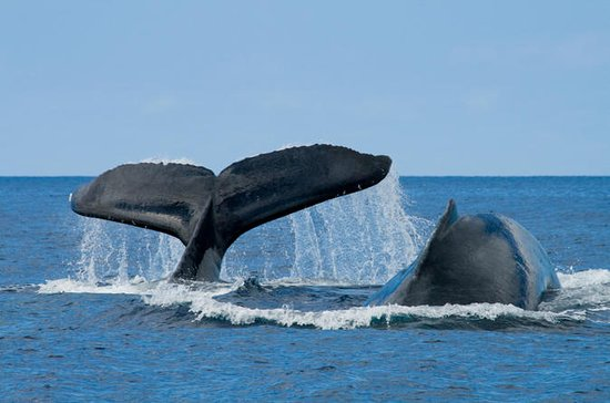San Diego Whale Watching Expedition...